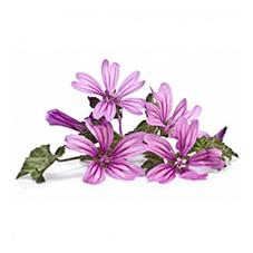 Eau florale de mauve