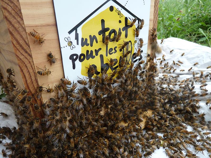ruche Un Toit Pour Les Abeilles