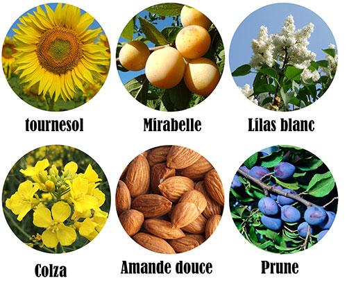 ingrédients notables huile post épilation