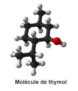 molécule                                 de thymol
